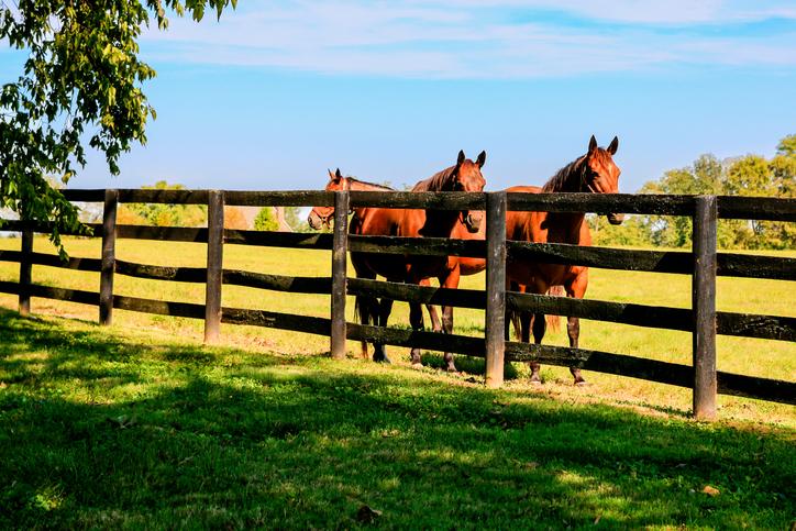 Bo på hästgård