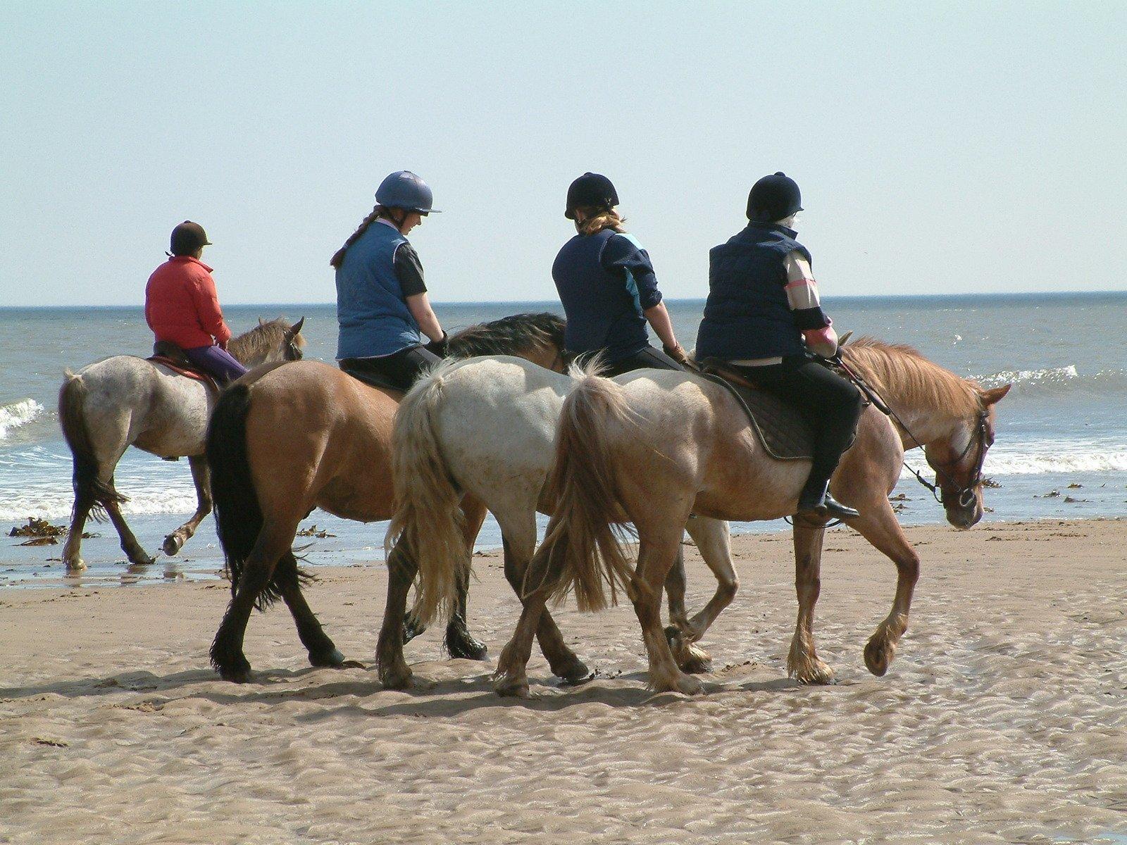 Turridning – Njut av naturen från hästryggen